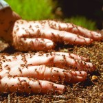 Hands In Ant Nest