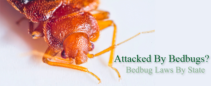 Bedbug Laws By State