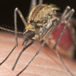 Exterme_Close-Up_Mosquito_Sucking_Blood