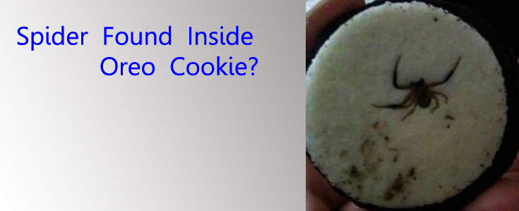 Spider Found In Oreo: Real Or Fake?