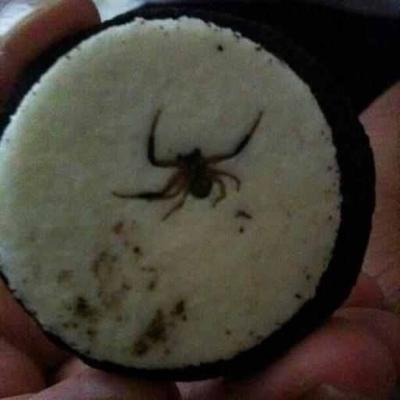 Spider In Oreo