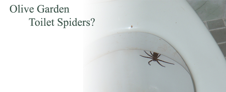 Toilet Spiders At Florida Olive Garden Deemed Hoax